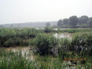 Chanba wetland