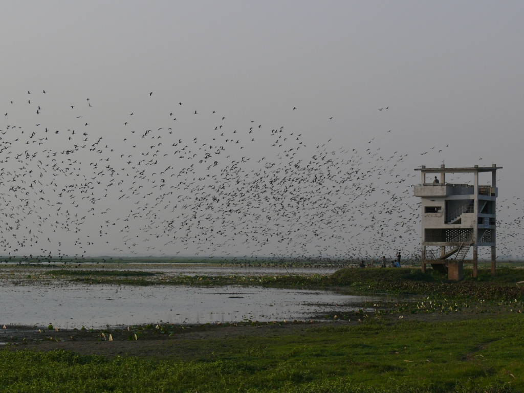 wetland resource in bangladesh Degradation of wetland creates adverse impact on natural environment,  ecosystem and on drainage congestion  affiliations: water resources planning  organization, house 103, road 1, banani, dhaka – 1213, bangladesh.