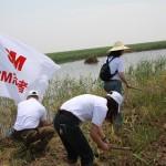 dong ting 来自3M 的志愿者在清除互花米草