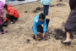Tree planting in Khakassia