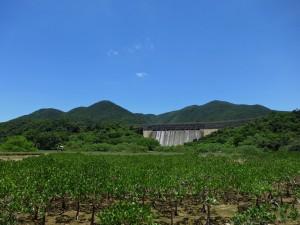 Tai Tam Dam