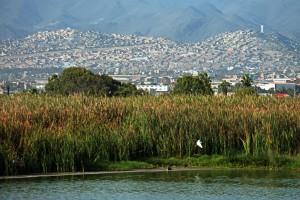 Humedal de Pantanos de Villa