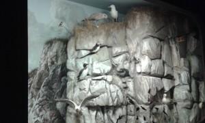 Sea bird display