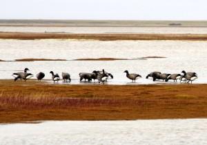 Gyadansky reserve