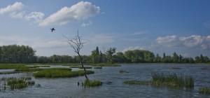 Humedal de Salburúa