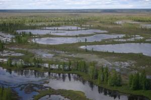 Bolshoe Vasyuganskoye Marshland