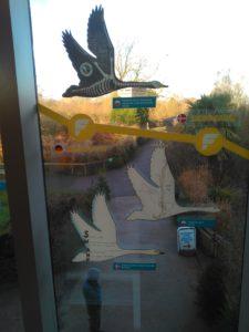 Siluetas de cisnes en la ventana de WWT Slimbridge