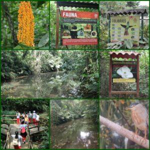 Botanic Gardens Wetland Visit