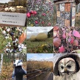bird,flowers,wood made owl