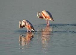birds on lake