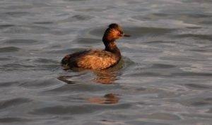 a bird on lake