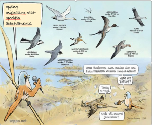 graphic of different types of birds