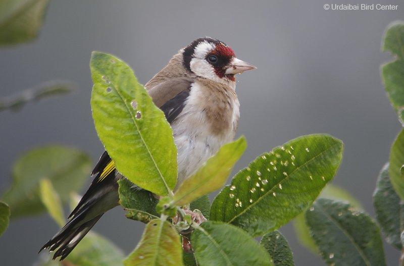 Photo :  Urdaibai Bird Center