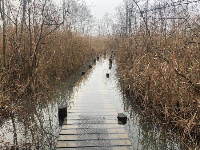 Flooded boardwalk in winter, temperate wetland