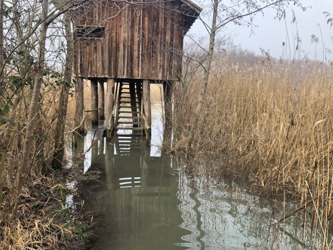 Tower on stilts in flooded temperate wetland