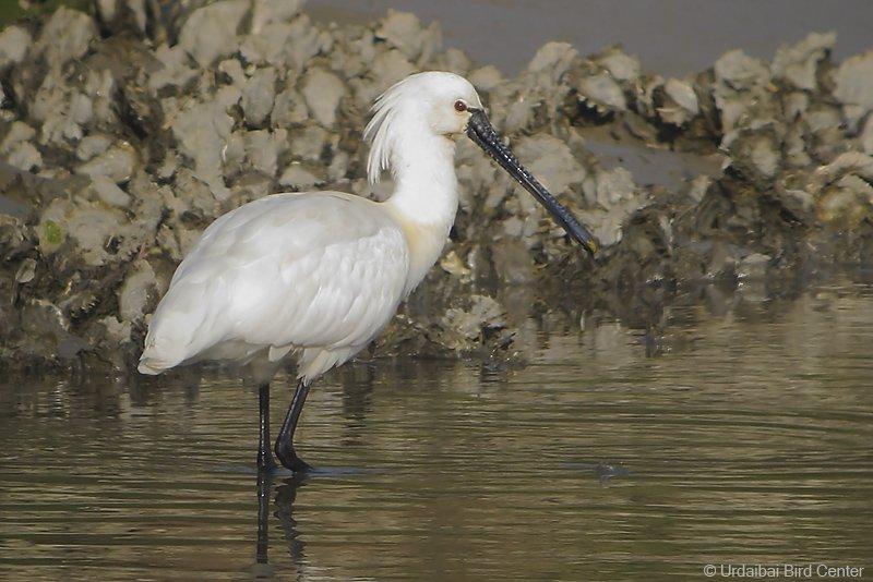 Photo:  Urdaibai Bird Center
