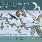 Official banner for World Migratory Bird Day 2020 in French