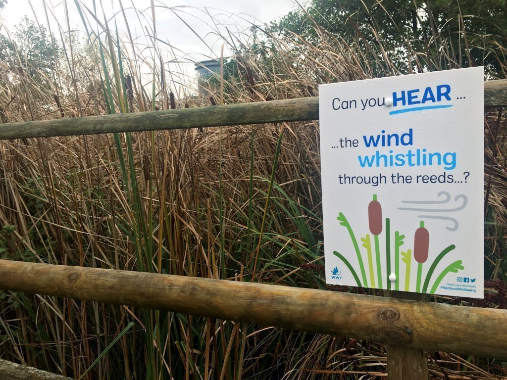 'Hear the wind' sign in rushes