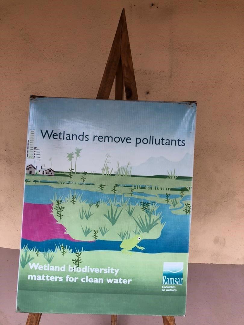Wetlands remove pollutants