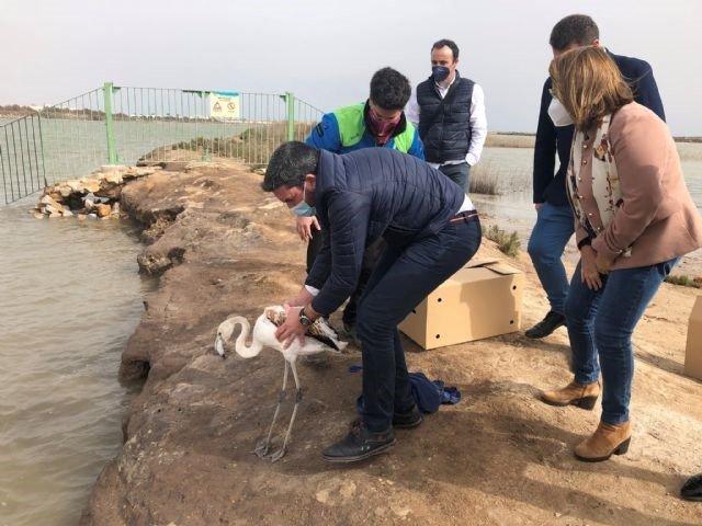 People releasing flamingo