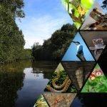 Montage for wetland symposium