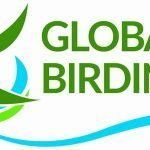 logo of Global Birding