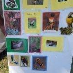 30_ideas_chart_ BirdLife South Africa WLI Practising bird ID before going into the field Kristi Garland
