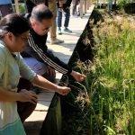 People examine wetland plant from boardwalk