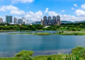 Wetland with tower blocks in the background
