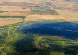 Aerial view of the wetland